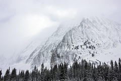 looking up (jirfy) Tags: canada canadian rockies k country alberta mountain alpine snow snowshoe trail hike winter wonderland chester lake mt kananaskis canmore smith dorrien