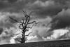 David P 3 (u3apg) Tags: deadtrees flowersplants trees treessingle