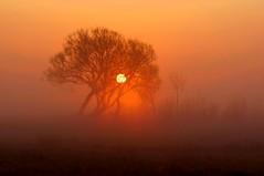 Quiet horizon... (Zbyszek Walkiewicz) Tags: landscape tree fog nature nikon coth5 ngc npc elitegalleryaoi bestcapturesaoi aoi