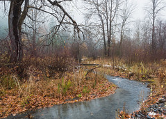 A Good Impression Of Myself (John Westrock) Tags: nature trees stream water fog foggy washingtonstate pacificnorthwest canoneos5dmarkiii canonef2470mmf28lusm morning overcast cloudy woodland