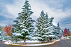 Magical Autumn Snow (RussellK2013) Tags: snow snowfall trees suburb picturesque scene scenery scenicsnotjustlandscapes scape scenic nikon nikkor nature ngc 1635mmf4ged 1635mmf4vr 1635mm wideangle d750 outdoor postcard landscape street