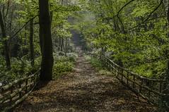 Woodland walk (jimhellier) Tags: landscape foot path berkshire downs the hollies autumn
