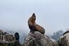 20170724-081325-Edit.jpg (deepskywim) Tags: landschappen rotsen zoogdieren dieren zeeleeuwen monterey california unitedstates us
