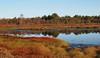 2017_11_0234 (petermit2) Tags: hatfieldmoors hatfield lindholme doncaster southyorkshire yorkshire peat bog humberheadpeatlands humberhead naturalengland nnr