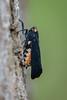 Cigarrinha - Treehopper (Acraephia perspicillata) (Eden Fontes) Tags: jardimbotânico cigarrinha jbrj jb acraephiaperspicillata rj treehopper riodejaneiro invertebrados