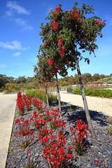Cranbourne RBG Nov 2017 072 (Graeme Butler) Tags: water landscape history gardens australianplants architecture victoria australia