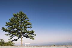 Iron Mine Hollow - Blue Ridge Parkway (Virginia) (Andrea Moscato) Tags: andreamoscato america statiuniti usa unitedstates us landscape paesaggio parco park pine tree alberi blue green nature natura natural naturale national np nationalpark sky cielo view vivid vista overlook mountain montagna minimal
