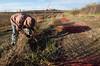 Cutting Dogwood (citrusjig) Tags: pentax k5iis sigma1020mmf456 dogwood