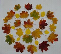 Autumn therapy (Scagliediterra) Tags: leaves autumn autunno fogliesecche acero colors colori composizione composition art arte nature naturamorta stilllife creativity creatività creazione mandala
