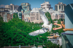 humans feeding seagulls from a cruise ship (DigiDreamGrafix.com) Tags: sea feed feeding seagull gull image white sky nature flying wind action animal man hand wildlife bird active ocean wild wing bread flight birds feather wings azure plumage seagulls ornithology gulls canada usa victoria cruiseship