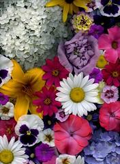 58618.01 bouquet (horticultural art) Tags: horticulturalart bouquet flowers