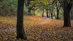 Autumn in the park [46/100]