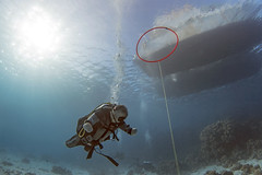 quadruple amputee man takes diving course 25 (KnyazevDA) Tags: disability disabled diver diving deptherapy undersea padi underwater owd redsea buddy handicapped aowd egypt sea wheelchair travel amputee paraplegia paraplegic