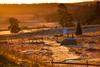 Autumn morning (RdeUppsala) Tags: uppland uppsala hågadalen landscape landskap light luz paisaje naturaleza nature natur autumn outdoor otoño höst ricardofeinstein haze dimma neblina escarcha frost golden dorada path sendero stig