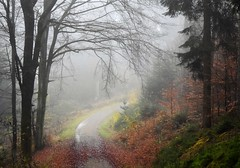 Colorful foggy morning (:Linda:) Tags: germany thuringia village bürden mist path beechtree baretree curvy