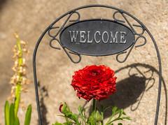 welcome to the weekend - Wilkommen im Wochenende (ralfkai41) Tags: welcome blossom blüte decoration blume willkommen flower dekoration botschaft massage