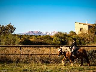 Un endroit que j'aime beaucoup... #associationcaramel #lesecuriesdecatalogne #horses #canigou #nature #gx80