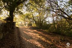 Mosteiro de Carboeiro (David Castro Rodriguez) Tags: nikon nikkor aire libre molino carboeiro bosque encantado light