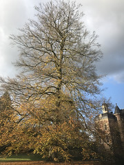 Another vast tree (Nieuwe schoenen; ik ben er weer) Tags: castel museum willink bridgeofglass autumn trees kasteelruurlo museummore carelwillink glazenbrug slotgracht herfst bomen llandschap park