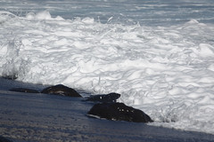Candelaria (RS_1978) Tags: sonycybershotdscrx10iii strand sony küste meer spanien gewässer acqua beach coast costa côte dscrx10m3 eau espagne españa mar mare mer sea spain wasser water 海 candelaria canarias es