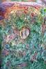 weathered mast (primemundo) Tags: algae rust odc hole mast