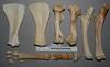 Fore limb (JRochester) Tags: horse equus ferus bone bones skeleton fore limb scapula humerus ulna radius carpals phalanx sesamoid