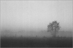 November (Ulla M.) Tags: nebel fog november autumn fall sw bw bnw blackandwhite schwarzweis selfdeveloped selbstentwickelt nikonfm reflectaproscan10t rodinal umphotoart grain mystisch