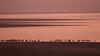 KP5A6637 (monik.p) Tags: rouge oiseaux migration grues lac du der