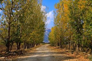 #lebanon #west_bekaa #autumn #nature_photography #photooftheday #landscape_captures #landscape_photography #photo