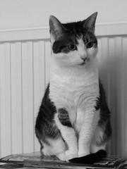 Indignant cat (Pat's_photos) Tags: pet cat