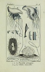 n52_w1150 (BioDivLibrary) Tags: annelida atlases cnidaria echinodermata eels helminths worms universitylibraryuniversityofillinoisurbanachampaign bhl:page=54348094 dc:identifier=httpsbiodiversitylibraryorgpage54348094