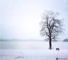 GW7_3077 (john_berg5) Tags: 4winter see wagging foggy tree lake