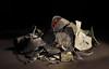 Scrap Metal (Phancurio) Tags: scrap metal lead zinc benefits poverty