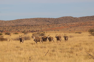 South Africa Hunting Safari - Northern Cape 90