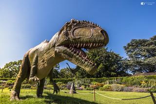 Dinosaur T Rex at Bristol zoo