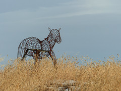 Sculpture at Granary Road (annkelliott) Tags: alberta canada swofcalgary granaryroad marketgarden sculpture animal horse wire grass sky outdoor fall autumn 19november2017 fz200 fz2004 panasonic lumix annkelliott anneelliott ©anneelliott2017 ©allrightsreserved
