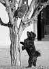 Cats and dogs (Robyn Hooz) Tags: cats dogs penelope pet tree albero stand fur branches bau miao