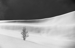 Lonely tree (andreasbrink) Tags: italy landscape mountains winter alpedevero snow blackwhite tree minimalism