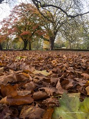 Bute Park, Cardiff 2017 11 15 #6 (Gareth Lovering Photography 5,000,061) Tags: cardiff wales millennium centre bute park bay roath olympus omdem10ii 14150mm garethloveringphotography