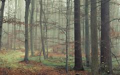 Pastel Forest (Netsrak) Tags: baum eifel europa europe herbst landschaft natur nebel wald autumn fall fog landscape mist nature woods bäume