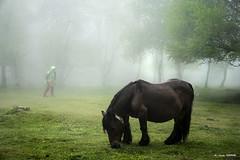 Preparada para dar a luz (Jabi Artaraz) Tags: jabiartaraz jartaraz zb euskoflickr pottoka abedules urkiola primavera montañero yegua horse nature hierba pradera prado árboles