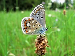 Butterfly 1512