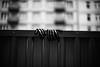 Mittens 92.365 (ewitsoe) Tags: gloves leftbehind forgotten mittens ewitsoe canon eos6dii 50mm12 lseries street urban monochrome winter autumn cold zima poznan poalnd cityscape bnw blackandwhite 92 365 poland
