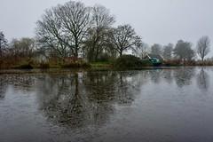 DSC06124 (hofsteej) Tags: holland middendelfland zuidholland netherlands december vlaardingervaart broekpolder natuurmonumenten