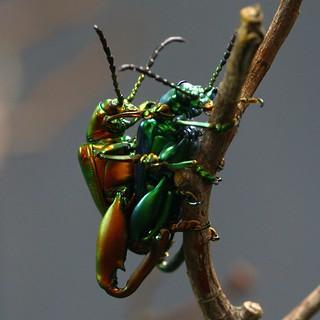 Busy Beetles