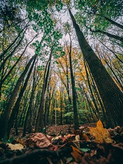 Trees reaching for the sky. (lukassustala) Tags: trees autumn herbst colors wideangle ultrawideangle mft