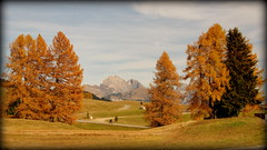 Lonely cycler (Seiser Alm, Italy) (armxesde) Tags: pentax ricoh k3 italien italy südtirol altoadige herbst autumn fall berg mountain alps alpen dolomiten dolomites tree baum alpedisiusi seiseralm
