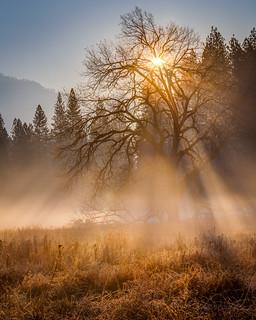 Sun Rays in Yosemite Ground Fog