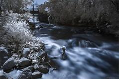 Essais IR - fausse couleurs - eau (StefDenis) Tags: grandparcsetespacepublique infrarouge parcdeliledelavisitation photostypedetraitement montréal québec canada ca