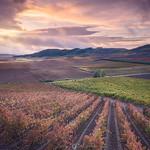 wine fields thumbnail